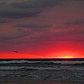 Sunrise Pink by JC Findley
