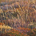 Sunrise Reflections On Dried Grass by Marco Busoni