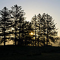 Sunrise Shines Through The Pines by Bill Cannon