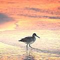 Sunrise Shorebird by Henry Kowalski