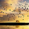 Birds Awaken At Sunrise by Simon Bratt Photography LRPS