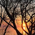 Sunrise Through The Chaos Of Willow Branches by Georgia Mizuleva