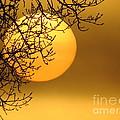 Sunrise Through The Fog by David Lankton