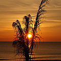 Sunrise Through The Palm by Kristen Mohr