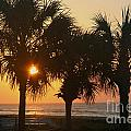 Sunrise Through The Palms by Kevin McCarthy