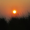 Sunrise Through The Tall Grass by Bill Cannon