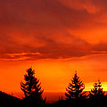 Sunset And Fir Trees by Patrick Kessler