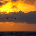 Sunset And Pelicans by Greg Butcher