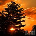 Sunset And Pine Tree  by Olivier Le Queinec