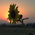 Sunset And Sunflower by Mae Wertz