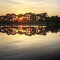 Sunset And Trees On Water by Matthew Gibson