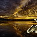 Sunset At Swan Lake  by Ludmila Nayvelt