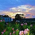 Sunset At Tasty's In Anguilla by Jennifer Lamanca Kaufman