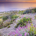 Sunset At The Beach  Flowers On The Sand by Guido Montanes Castillo