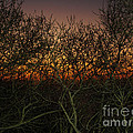 Sunset At The Presidio   by Jacklyn Duryea Fraizer