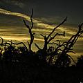 Sunset Avalon Beach by Fran Gallogly