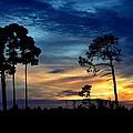 Sunset Behind The Trees by Patricia Twardzik