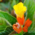 Sunset Bells Flower by Jeelan Clark