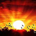 Sunset Birds by Ben Yassa