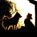 Sunset Buddies by Tracey Beer