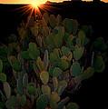 Sunset Cactus by Britt Runyon