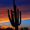 Sunset Cactus by Tommy Anderson