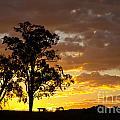 Sunset by Carole Lloyd