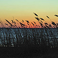 Sunset Colors Island Beach State Park Nj by Terry DeLuco