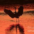 Sunset Dancer by John F Tsumas