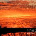 Sunset Detail  by Lizi Beard-Ward