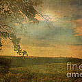 Sunset Farmland by Debbie Portwood