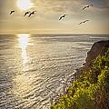 Sunset Flight by David Doucot
