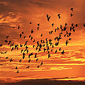 Sunset Flight by Mandy Shupp