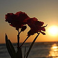 Sunset Flowers by May Photography