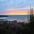 Sunset Garden View by Athena Mckinzie