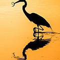 Sunset. Great Blue Heron. by Yury Loginov