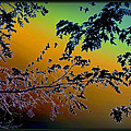 Sunset Honkers