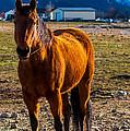 Sunset Bay Horse Heber Valley Utah by Gary Whitton