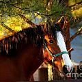 Sunset Horse by Reid Callaway