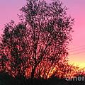 Sunset In April- Silute Lithuania by Ausra Huntington nee Paulauskaite