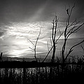Sunset In Black And White by Mark Andrew Thomas