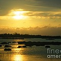 Sunset In Camargue - France by Cristina Stefan