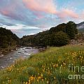 Sunset In Cobb Valley Of Kahurangi Np Of New Zealand by Stephan Pietzko