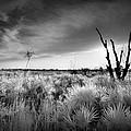 Sunset In Myakka by Bradley R Youngberg