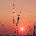 Sunset In Tall Grass by Bill Cannon