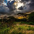 Sunset In The Bush by Andrew Matwijec