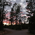 Sunset In The Pines by Michelle Cassella