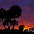 Sunset In West Palm Beach In Florida by Les Palenik
