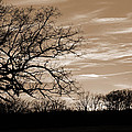 Sunset Is Sepia  by Jeanne May