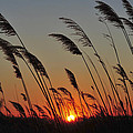 Sunset Island Beach State Park Nj by Terry DeLuco